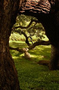 Granby Oak 4
